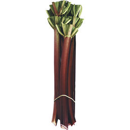 Photo of Rhubarb Bunch