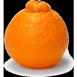 Photo of Mandarin Satsuma