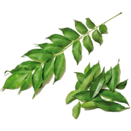 Photo of Fresh Leaf Curry Leaves
