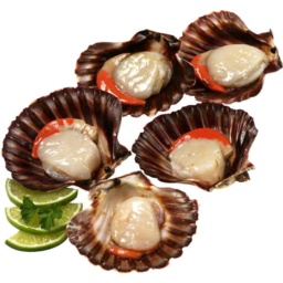 Photo of Tasmanian Scallops