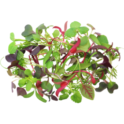 Photo of Thymebank Salad Herbs 10g