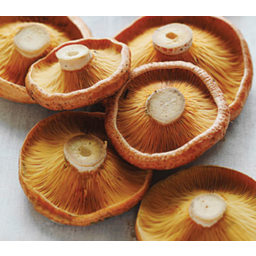 Photo of Mushrooms Pine