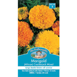 Photo of Seed Marigold Crckjck Africn A