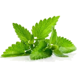 Photo of Butler Herbs Vietamese Mint