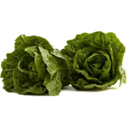 Photo of Cos Lettuce Organic