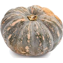 Photo of Pumpkin Kent (Jap) Kg