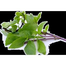 Photo of Herbs Basil Thai