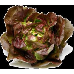 Photo of Lettuce Mignonette