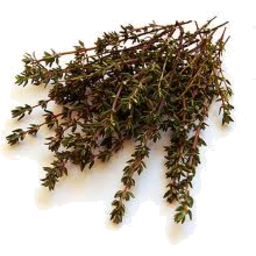 Photo of Thyme