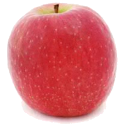 Photo of Apples - Pink Lady
