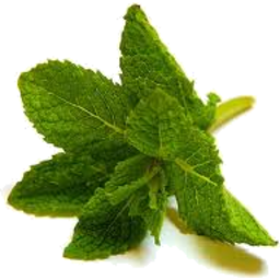 Photo of Herbs Mint Fresh