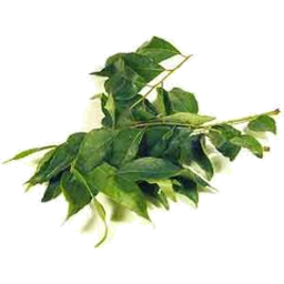 Photo of Curry Leaves P/P