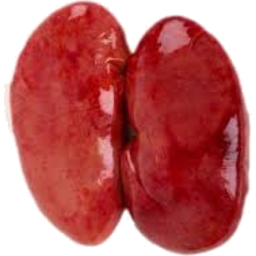 Photo of Pigs Kidneys