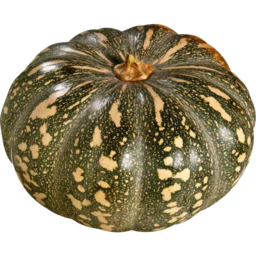 Photo of Kent Pumpkin