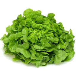 Photo of Lettuce Fancy