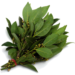 Photo of Herb - Bay Leaves