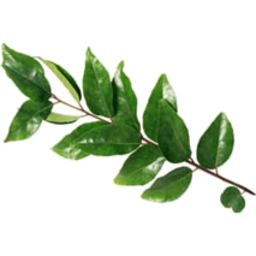 Photo of Curry Leaves 10gm