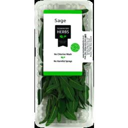 Photo of Tasman Bay Herbs Fresh Sage 14g