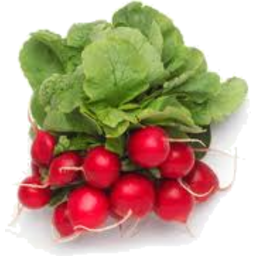 Photo of Radish Bunch