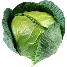Photo of Cabbage Green Each