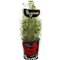 Photo of Fresh Superb Herb Thyme