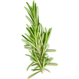 Photo of Thymebank Rosemary 10g