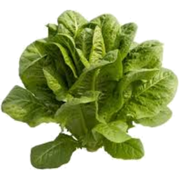 Photo of Fancy Lettuce Rosso Each