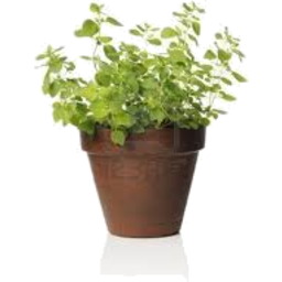 Photo of Herbs - Potted Hydroponic Ea