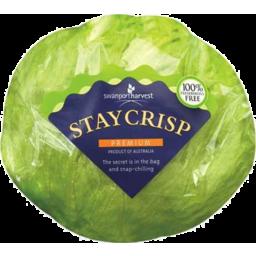 Photo of Wrapped Iceberg Lettuce
