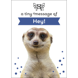 Photo of A Tiny Message Of Hey!