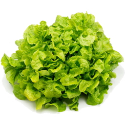 Photo of Lettuce - Green Oak