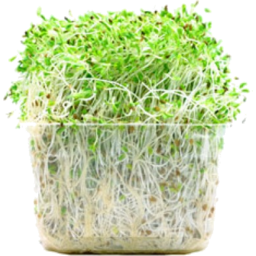 Photo of Sprouts Alfalfa & Garlic