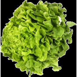 Photo of Lettuce Oak Leaf Green