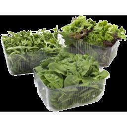 Photo of Salad Mix Lettuce
