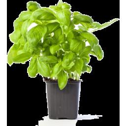 Photo of Basil Sweet Pots Each