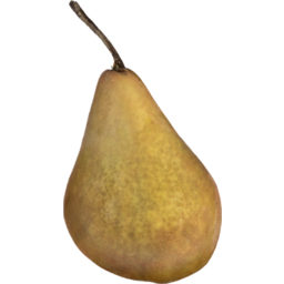Photo of Pears Beurre Bosc