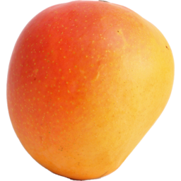 Photo of Mango R2E2 (Large)
