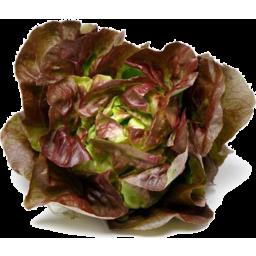 Photo of Lettuce Mignonette Each