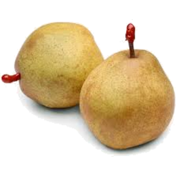 Photo of Pear Angelys Kg