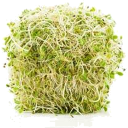 Photo of Alfalfa Sprouts 125gm