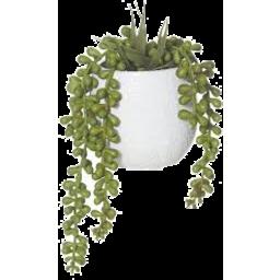 Photo of Albi Hanging Succulents