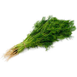 Photo of Herb - Dill
