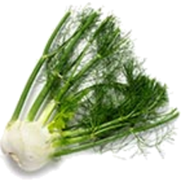 Photo of Fennel
