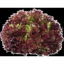 Photo of Lettuce Oak Leaf Red