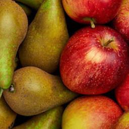 Photo of Fresh Fruit Delight