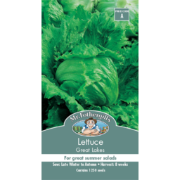 Photo of Seed Lettuce Great Lakes A
