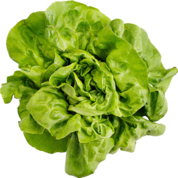 Photo of Lettuce - Butter