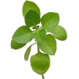 Photo of Butler Herbs Oregano