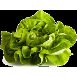 Photo of Lettuce Butter Each