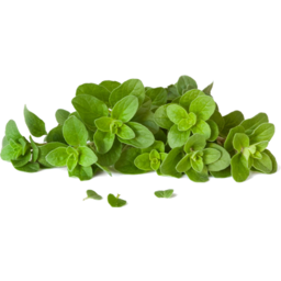 Photo of Oregano P/P